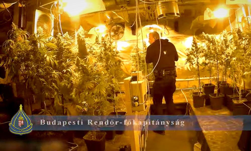 Rajtaütés: 150 millió forintos drogbizniszt számoltak fel Budafokon