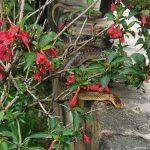 Kígyó az udvarban! Méretes hüllő lepte meg az egyik ház lakóit Nagykovácsiban – VIDEÓ