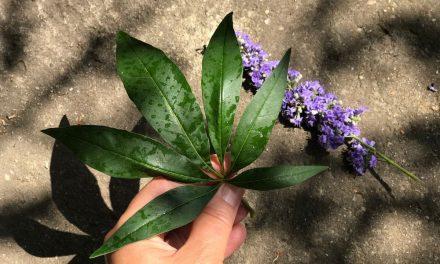 Ez a növény biztosan elűzi a szúnyogokat, de van még néhány ötlet ellenük