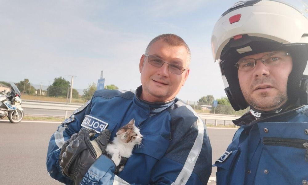 Autópályára tévedt kiscicát mentettek meg a monori rendőrök