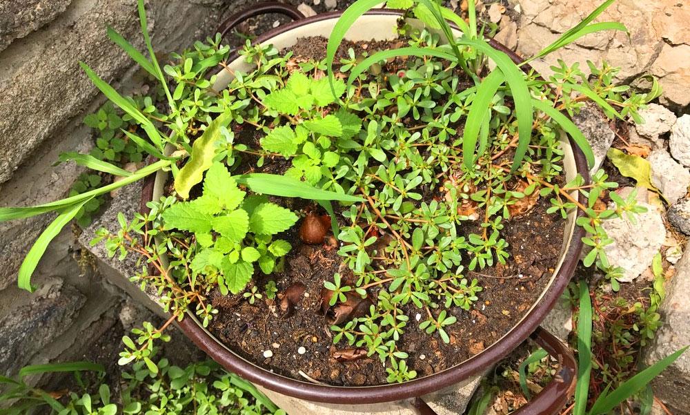 Segítség, elnyomja a kertet a gyom, mit tegyek?