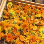 Így tedd el a nyár fűszereit és aromás gyógynövényeit