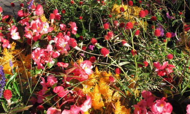 Tegyünk róla, hogy színes virágkarnevállal búcsúzzon a kert nyártól