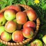 Hull az alma a fáról, rohad a fosóka az ágakon, gondolkodjunk-e e cefrében?