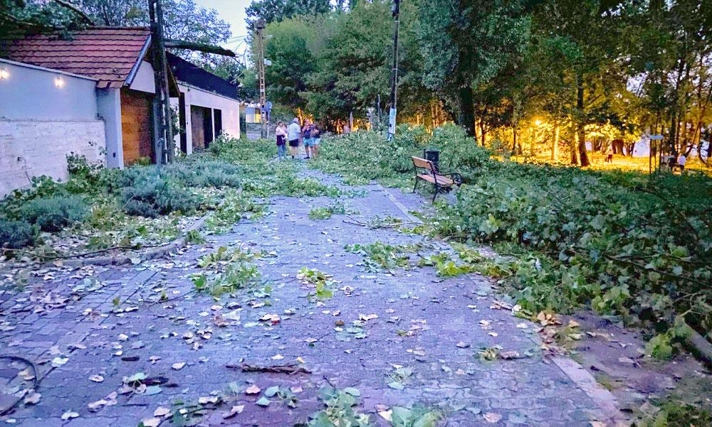 Újraélesztették az édesanyát, mert rázuhant egy 300 kilós faág Dunakeszin a viharban