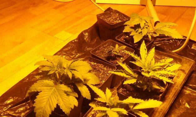 Saját lakásában termesztette a kábítószert, emellett többféle drogot is árult az újbudai férfi