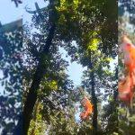 Most jött: meghalt az a siklóernyős, aki egy magas fán akadt fent Vértesszőlősnél