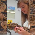 Óriáskígyót találtak Dunaharasztiban, a boa hetek óta kóborolhatott az utcán
