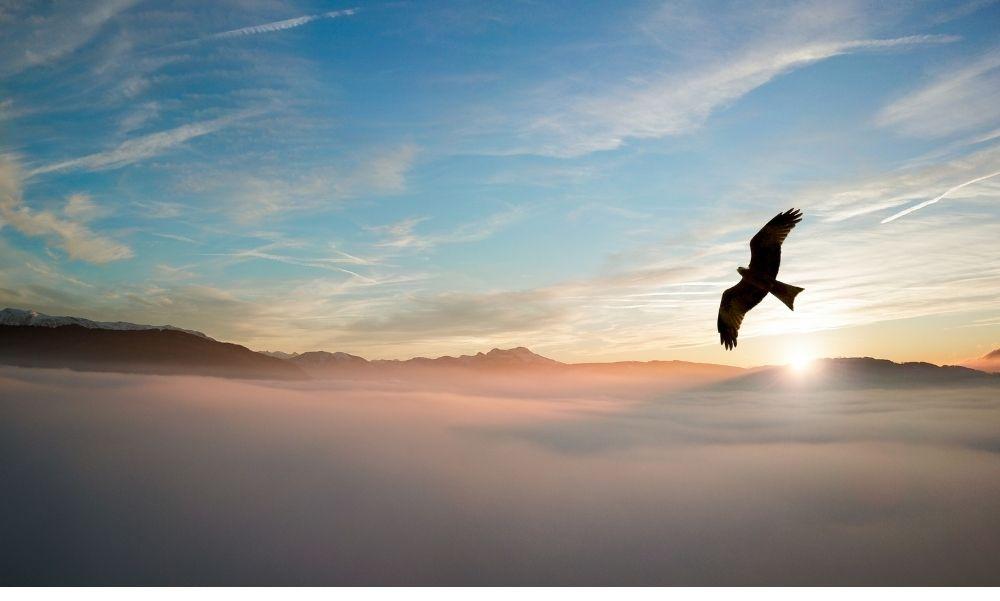 Villamos légvezeték hálózatának újabb szakaszát viszi föld alá az E.ON a madarak védelmében