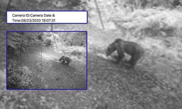 Egy medve elől menekült az autójába a horgász a kedvelt üdölőhelyen
