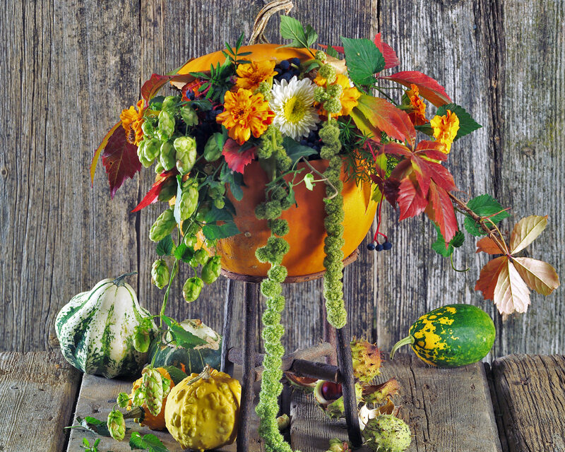 Halloween horror hangulat nélkül? Tökök, füvek, bogyók a kertből