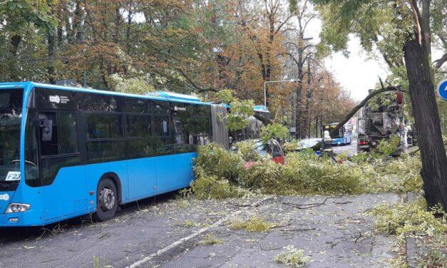 Egy betonkeverő miatt dőlt rá a fa két autóra és a BKV buszra: óriási a torlódás a 2. kerületben