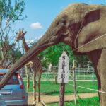 Megszűnik a Szadai Szafari Park, az önkormányzat nem akart nekik segíteni