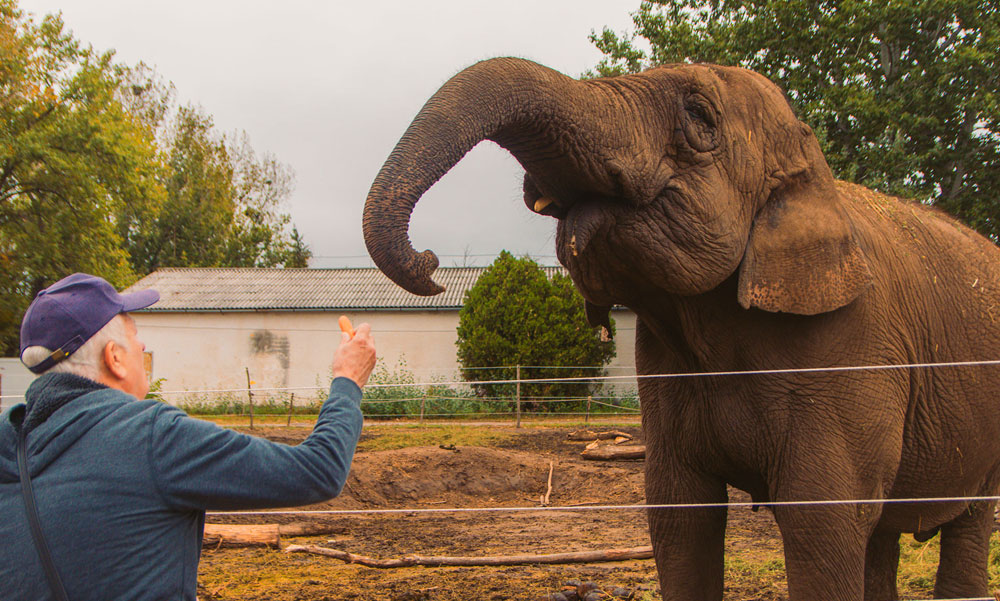 """""""Ez megmagyarázhatatlan számunkra is"""" – megszólalt a Szadán rejtélyes körülmények közt elpusztult elefántok tulajdonosa"""