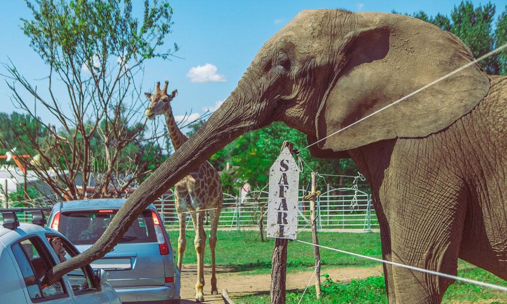 Az állatvédők is elmentek Casselly birtokára – Újabb drámai részletek derültek ki a szadai elefántok haláláról, a harmadik állat is az életéért küzdött