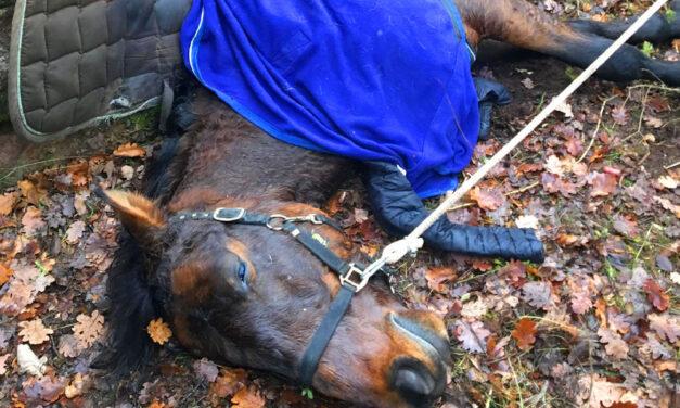 A kutyáktól rémült meg és szakadékba zuhant a ló Pilisborosjenőnél, a lovas éppen csak megúszta a balesetet