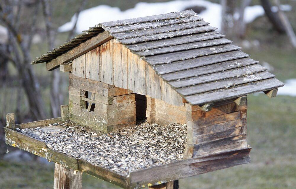 Most etessük a madarakat, hogy tavasztól nekünk dolgozzanak, imádni fogod a cinegéket a kertben!