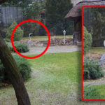 Ritka pillanatot kaptak le Gödön, egy szürke gém vendégeskedett egy ház udvarában, beindult a lájkvadászat