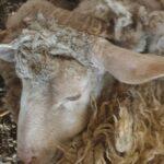 Sokkoló fotók: brutális, könyörtelen körülmények között tartották ezeket az állatokat Gödöllőn