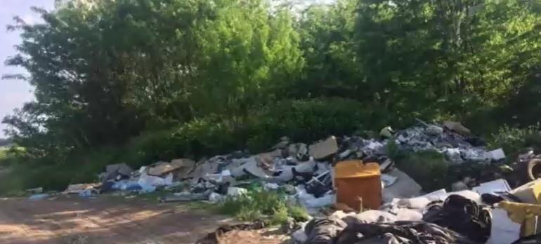 Kóbor kutyák miatt riasztották az állatvédőket a 2-es főúthoz – A helyszínre érve sokkot kaptak, egy illegális dögtelepre bukkantak – videó