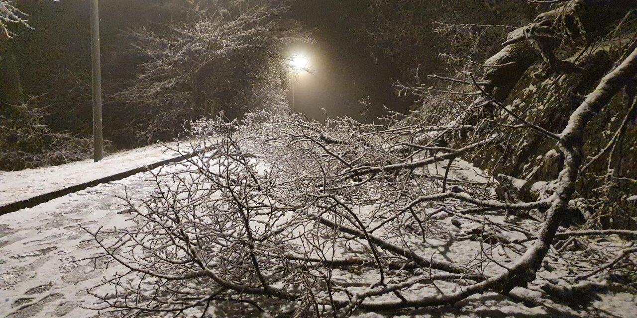 Lezárták a Normafát és a János-hegyet: az ónos eső miatt életveszélyesek a jeges fák