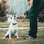 Állatkínzó garázdálkodik Pécelen, a lakók rettegnek, így próbálják óvni kedvenceiket