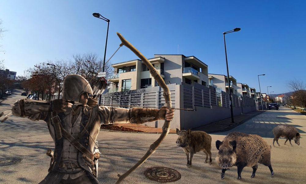 A budai luxusnegyedben íjjal ölik meg a vaddisznókat, a rókákat pedig befogják és Biatorbágynál engedik szabadon