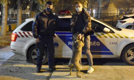 300 ezer forintos kutyát loptak el Gödön, berakták egy furgonba és elhajtottak vele, harci kutyát akartak belőle nevelni