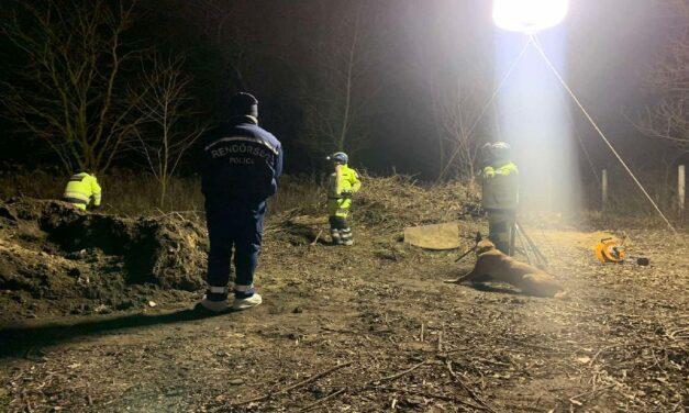 Horror: ló maradványai alól ásták ki egy nő holttestét