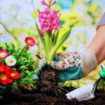 A jövő a magban kezdődik – Vess virágot, hogy gazdag kerted legyen