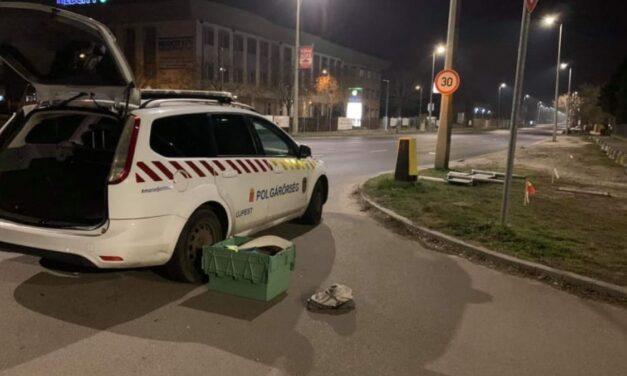 """""""Már nem volt idő semmire"""" – Újpesten, egy járdán szülte meg gyermekét ez a nő – Így segítettek neki a polgárőrök"""