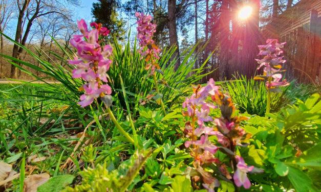 Berobbant a tavasz, a Budai-hegységben olyasmit láthatsz, amiről nem is álmodtál