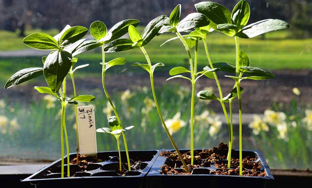 Palántázzunk okosan, ne kapkodj, és gyönyörű növényeid lesznek
