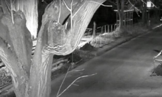 Videón, ahogy segítségnyújtás helyett lefotózta a 22. kerületi gödörbe zuhant férfit: a bajba jutott másnap reggelre meghalt