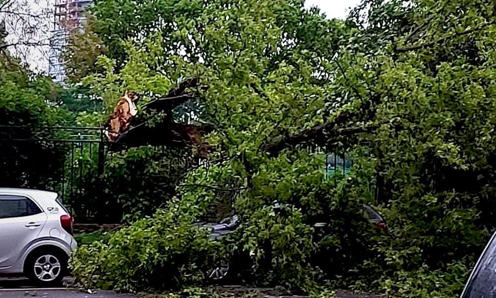Autókra dőlt fák, leszakadt vezetékek, káosz – lecsapott a vihar Budapestre és környékére