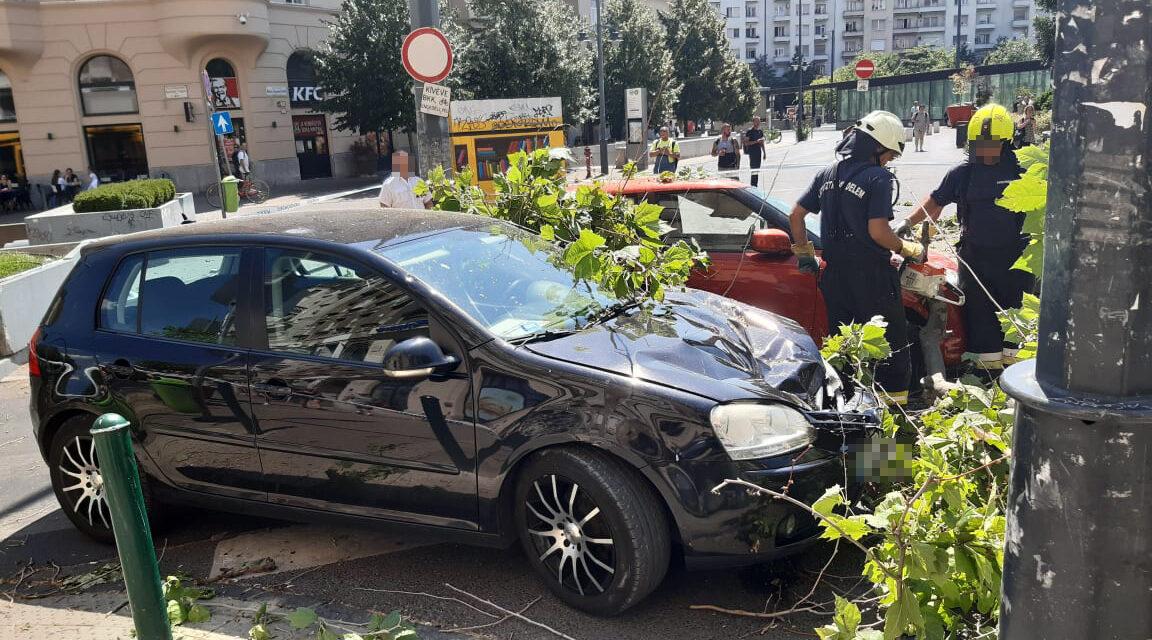 Kidőlt platánfa rongált meg több autót is Budapesten – Sokkoló képek a helyszínről