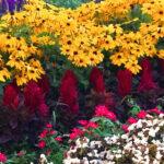 Legyen szebb a kerted, ültess virágokat és vidd el a fődíjat