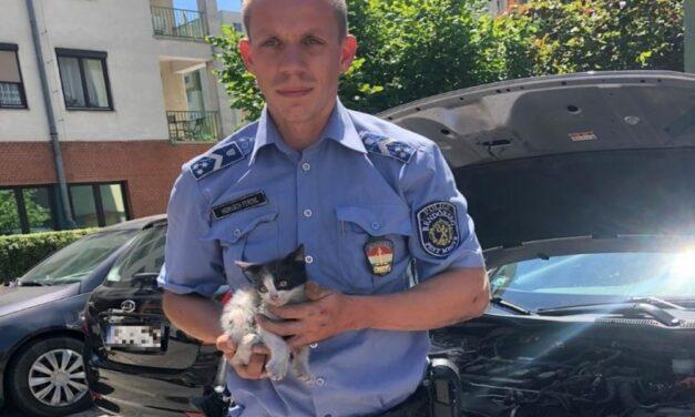 Szívszorító: szorult helyzetbe került kiscicát mentettek ki a rendőrök egy budaörsi parkolóban
