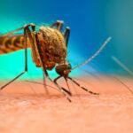 Elég volt a csípésekből: Itt a nagy szúnyogriasztó-teszt, ezeket a spray-ket érdemes venni, ha tényleg meg akarod úszni a viszketést