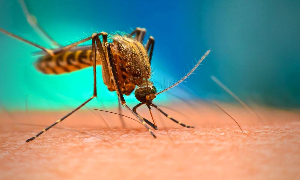 Itt a nagy szúnyogriasztó-teszt, ezeket a spray-ket érdemes venni, ha tényleg meg akarod úszni a viszketést