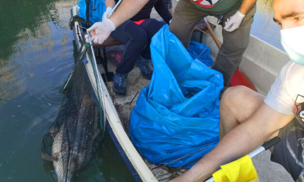 Elpusztult halak tömegét, több száz kiló foszló tetemet gyűjtöttek zsákokba az önkéntesek a Velencei-tónál