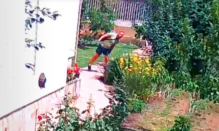 Döbbenetes videó! Pofátlan besurranó tolvajok vitték el a házaspár pénzét, amíg ők a kertben dolgoztak, felvétel készült a lopásról