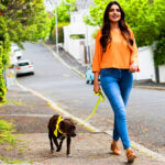Ezek a veszélyek fenyegetik a kertvárosi kutyákat