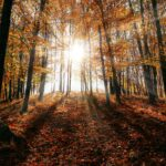 A bolondját járatja velünk ez az ősz: elképesztő időjárással robog tovább az október, ezt nem fogod elhinni