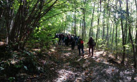 Mozgás, egészség, jutalom és jó társaság: Világ Gyalogló Hónap már a Budakörnyéki településeken is